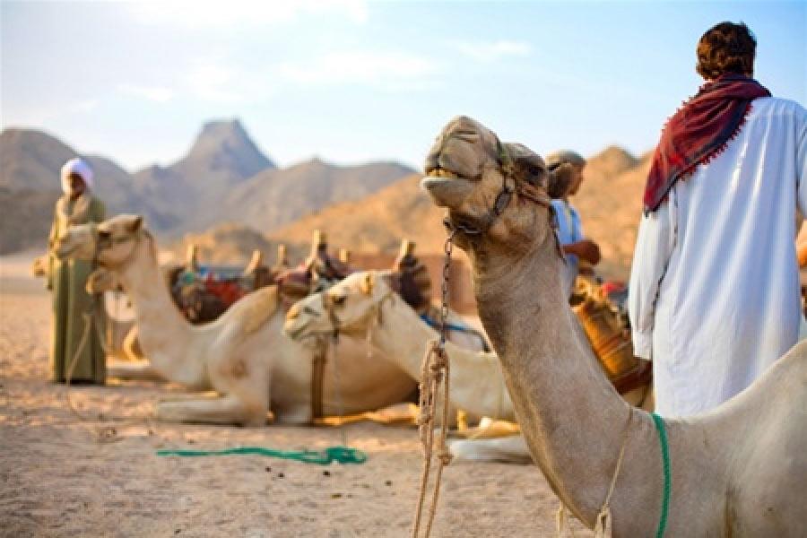 Бедуины - за сотни лет, «коренной» уклад их жизни не слишком изменился